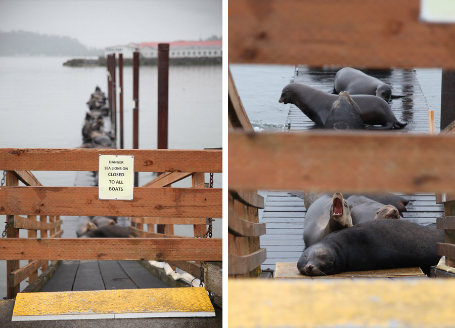 astoria_sealions_dock_2013