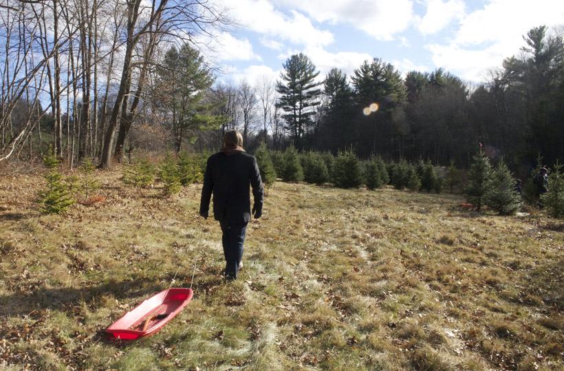 christmas_tree_2013_3