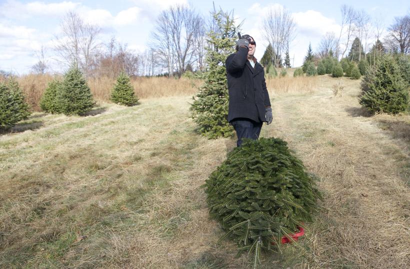 christmas_tree_2013_5