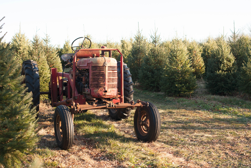 christmas-tree-farm-vintage-tractor